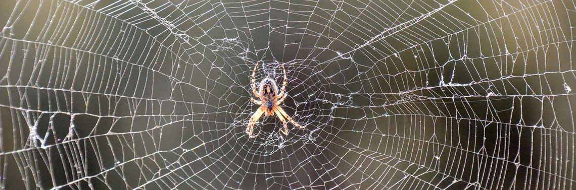 Gawler-Pest-Control-Removal-Barossa_0003_Spiders
