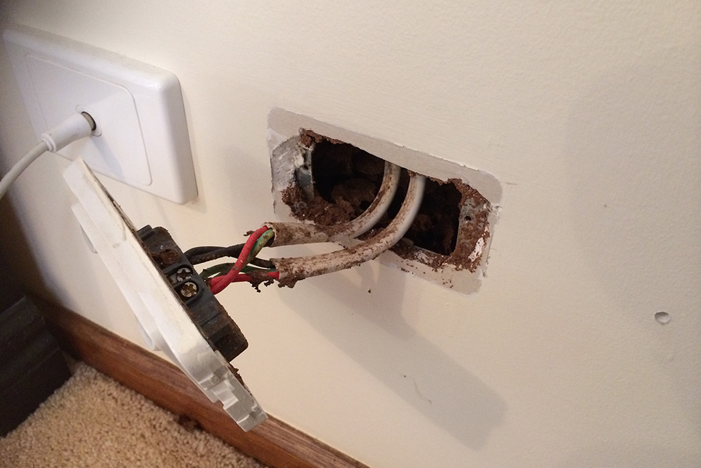 Gawler-Pest-Control-Residential-Solutions_0004_Termites in power point