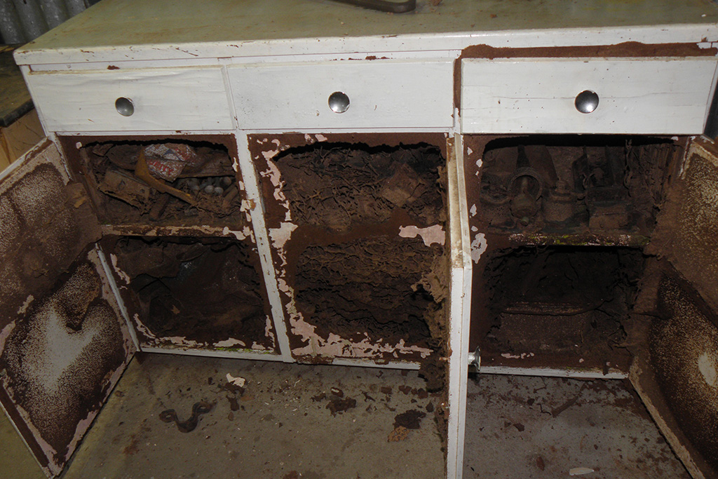 Gawler-Pest-Control-Residential-Solutions_0005_Termites in cupboard
