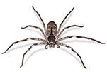 huntsman-gawler-pest-control