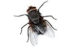 fly-bug-gawler-pest-control